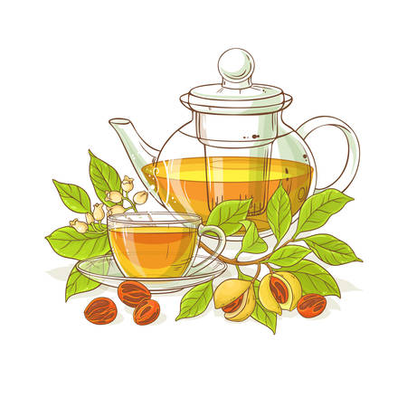 nutmeg tea in teapot illustration on white background