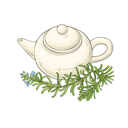 rosemary tea in teapot illustration on whte background Ilustrace