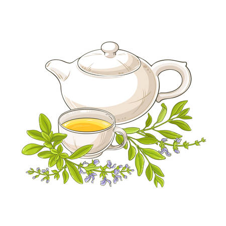 sage tea vector illustration on white background Ilustrace