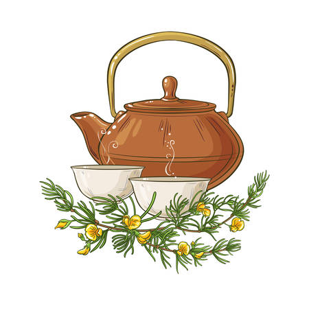 rooibos tea in teapot illustration on whte background