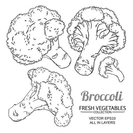 broccoli vector set on white background