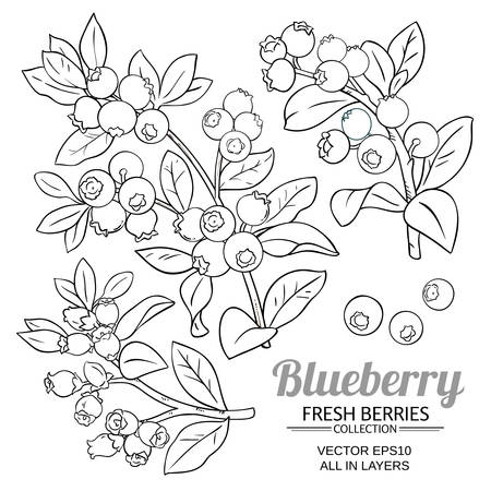 blueberry plant vector set on white background