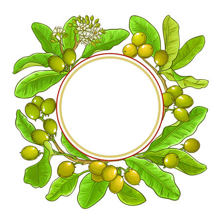 shea branches vector frame on white background  イラスト・ベクター素材