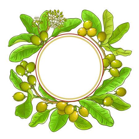 shea branches vector frame on white background Illustration