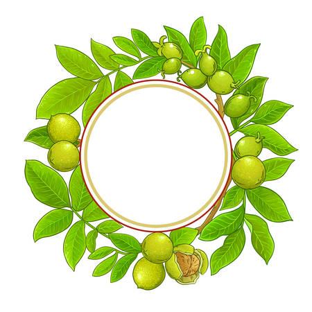 walnut branches vector frame on white background Illustration