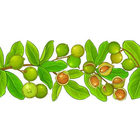 macadamia vector pattern on white background
