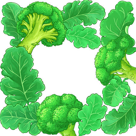 broccoli vector frame on white background
