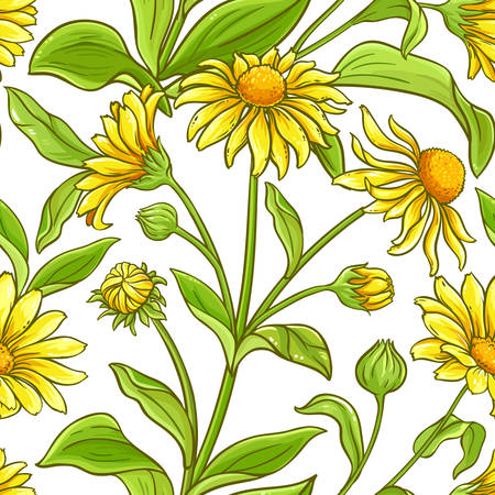 arnica vector pattern on white background Çizim