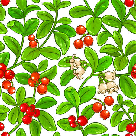 lingonberry vector pattern on white background Ilustrace