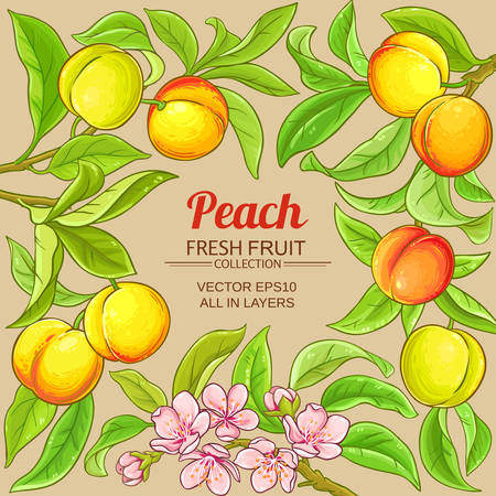 peach vector frame on color background
