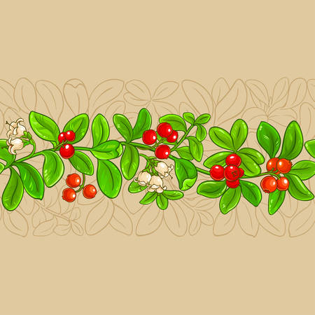 lingonberry vector pattern on color background Ilustrace