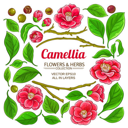 camellia elements set