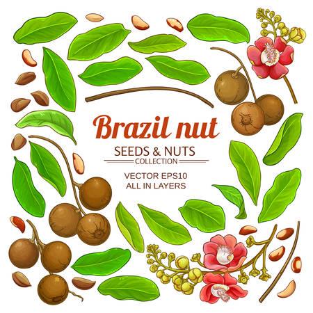 brazil nut elements set on white background