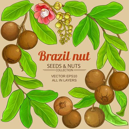 brazil nut branches frame on color background Ilustrace