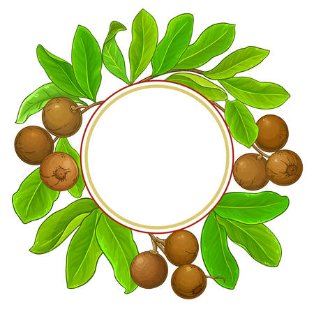 brazil nut branches frame on white background