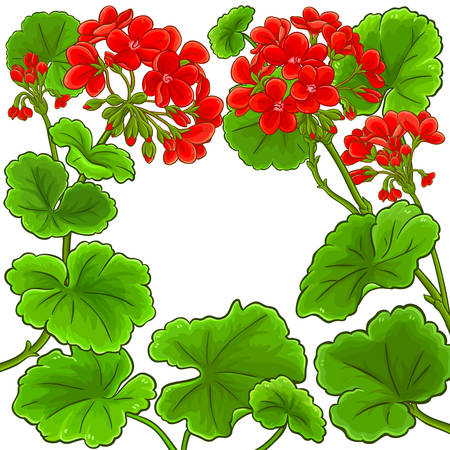 geranium vector frame on white background
