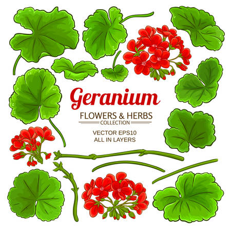 geranium elements set illustration