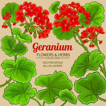 geranium vector frame illustration