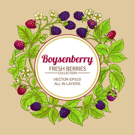 boysenberry vector frame illustration