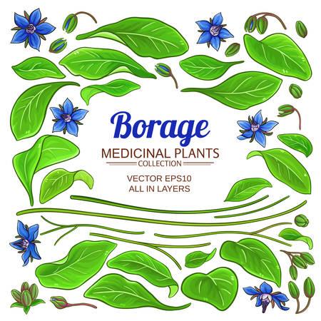 borage elements set on white background Illustration