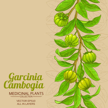 garcinia vector background