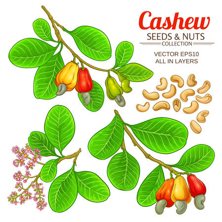 cashew vector set