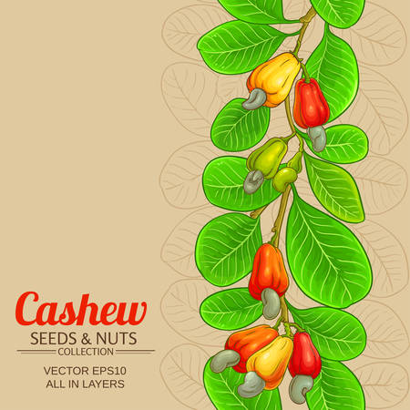cashew vector background