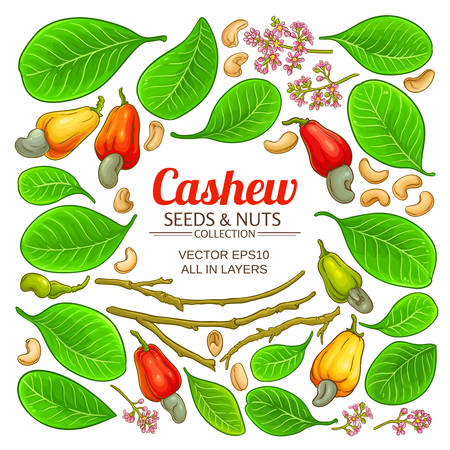 cashew elements set on white background