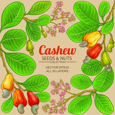 cashew vector frame on color background Ilustrace