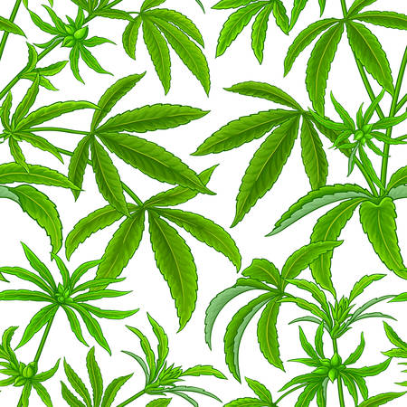 hemp vector pattern on white background