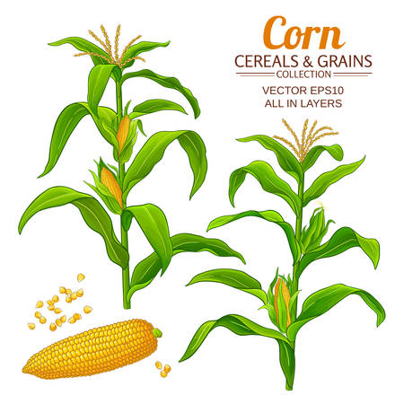 corn vector set on white background Ilustrace