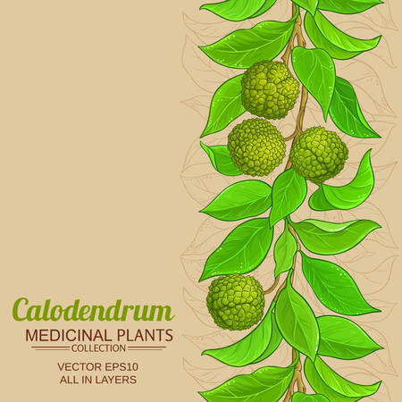 calodendrum branches vector pattern on color background