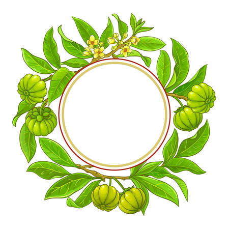 garcinia branches vector frame on white background