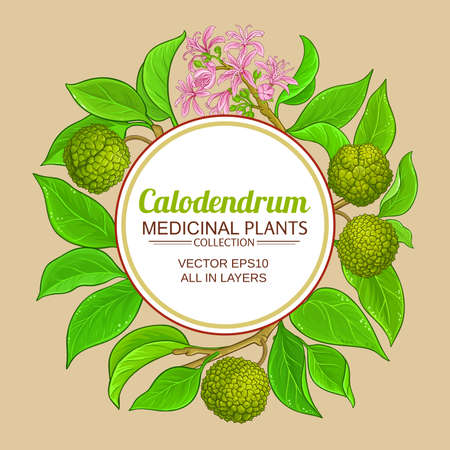 calodendrum vector frame Ilustracja