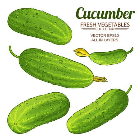 cucumber vector set