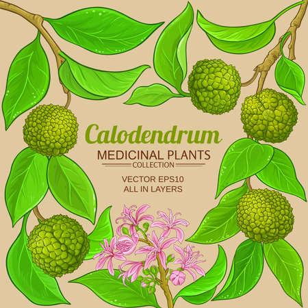 calodendrum vector frame Ilustração