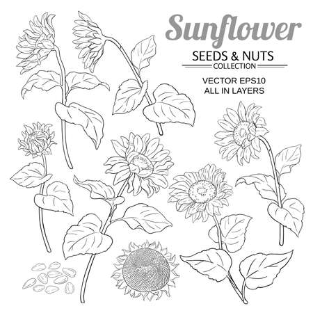 sunflower vector set