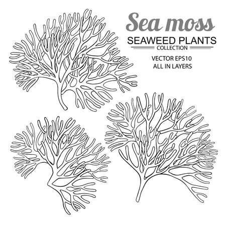 sea moss set