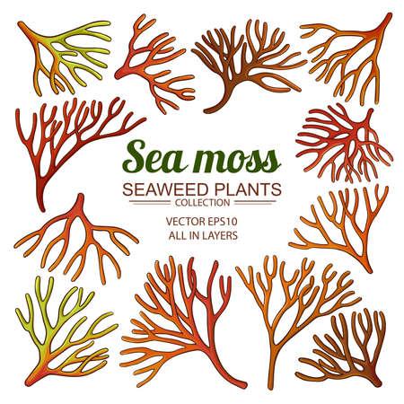 sea moss set Vecteurs