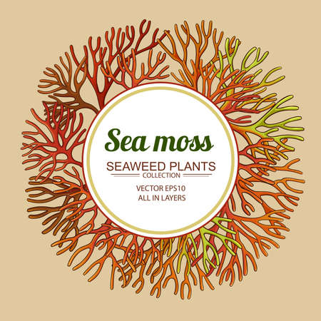 sea moss frame Vektorové ilustrace