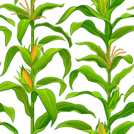 corn vector pattern Ilustrace