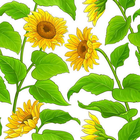 sunflower vector pattern Ilustrace