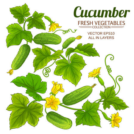 cucumber vector set