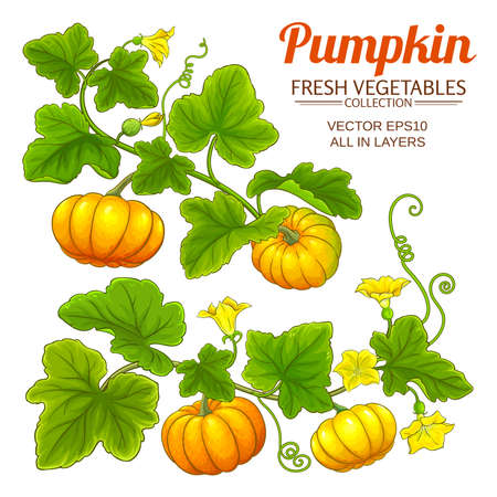pumpkin vector set