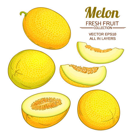 melon vector set Ilustrace