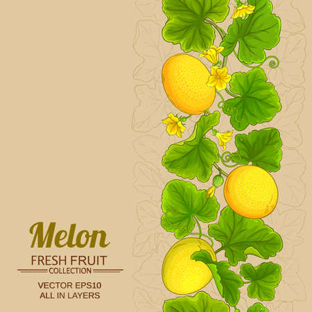melon vector frame