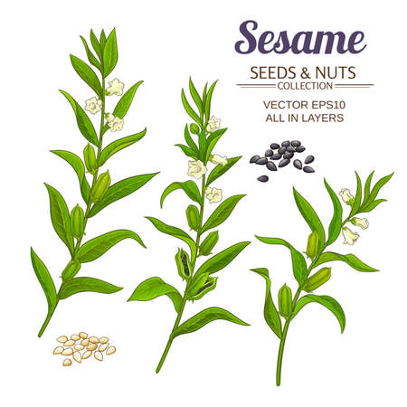 sesame vector set
