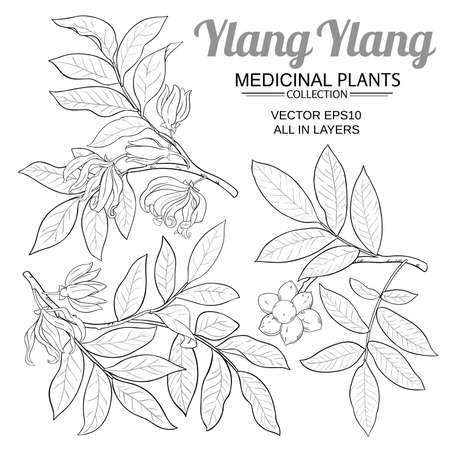 ylang ylang vector set