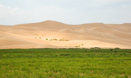 The advent of sand dunes on the fertile land.