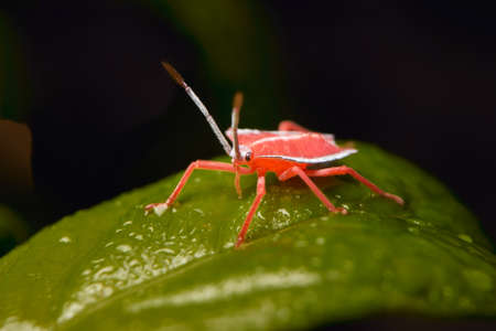 closeup view of tiny red insect on the green leaf